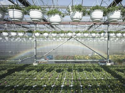 Greenhouse © Marcus Schwier