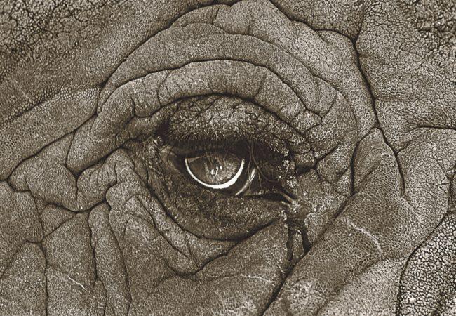 Elephant Man - Wisdom of the Earth, 2003